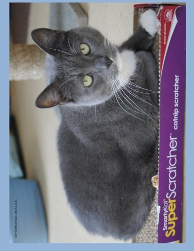 Grey Cat Blank Book Lined 8.5 by: Roffler, D