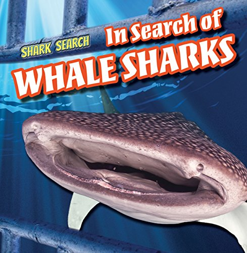 In Search of Whale Sharks: 6 (Shark Search): Caitie McAneney
