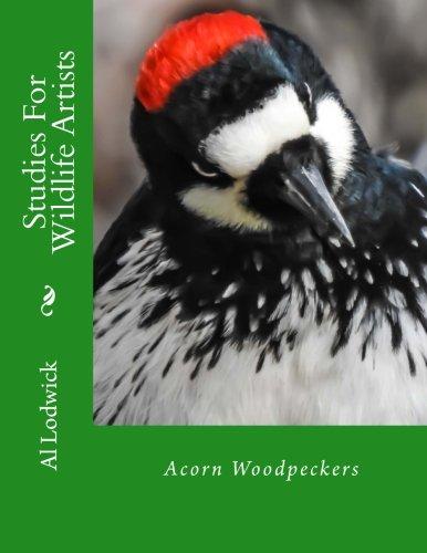 9781512139303: Acorn Woodpeckers: Studies For Wildlife Artists