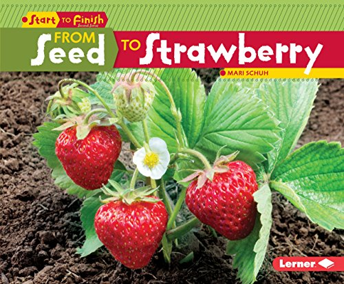 From Seed to Strawberry (Start to Finish) (Start to Finish, Second): Mari Schuh