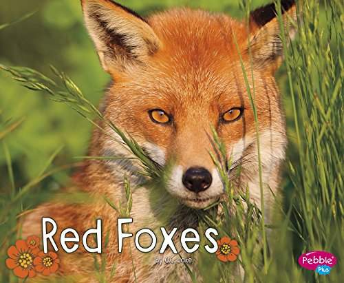 Red Foxes (Paperback): G.G. Lake