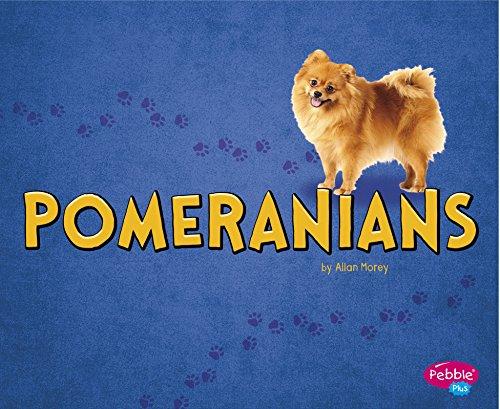 Pomeranians (Hardback): Allan Morey