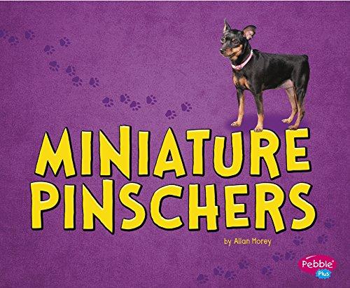 Miniature Pinschers: Morey, Allan