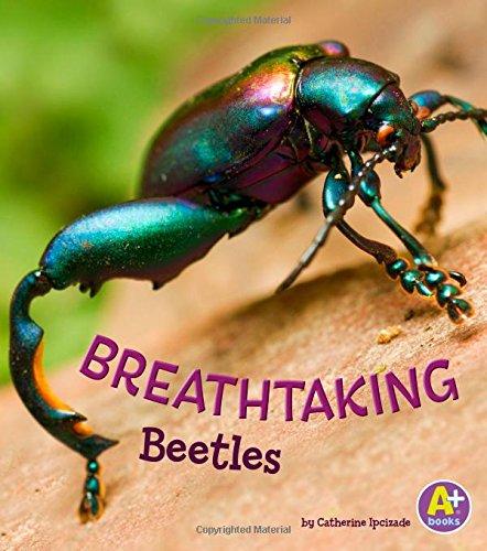 9781515744979: Breathtaking Beetles (Bugs Are Beautiful!)