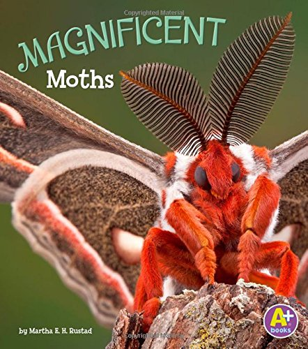 9781515744993: Magnificent Moths (Bugs Are Beautiful!)