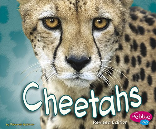 9781515761952: Cheetahs (African Animals)