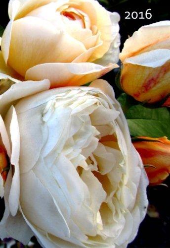 9781516909278: Mini Kalender 2016 - Cream Rose: ca. A6 - 1 Woche pro Seite