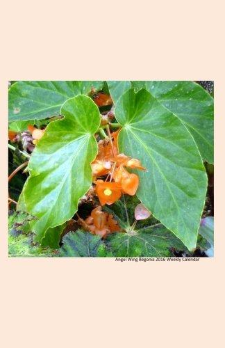 9781517555764: Angel Wing Begonia 2016 Weekly Calendar: 2016 week by week calendar with a cover photo of an angel wing begonia