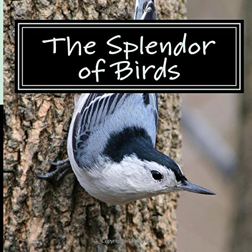 9781519317766: The Splendor of Birds: A Picture Book for Seniors, Adults with Alzheimer's and Others (Picture Books for Seniors, Alzheimer's Patients, Adults with ... and Others; A 'No Text' Book) (Volume 5)