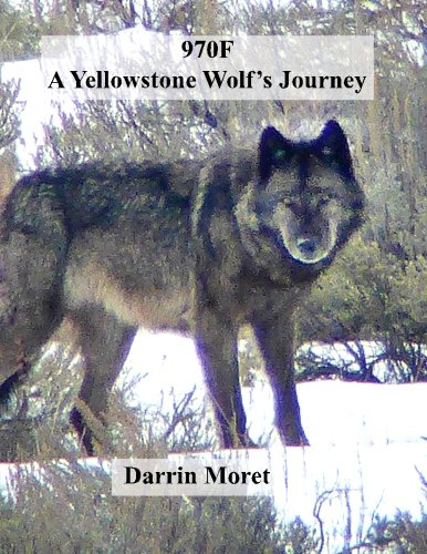 9781519640222: 970F: A Yellowstone Wolf's Journey