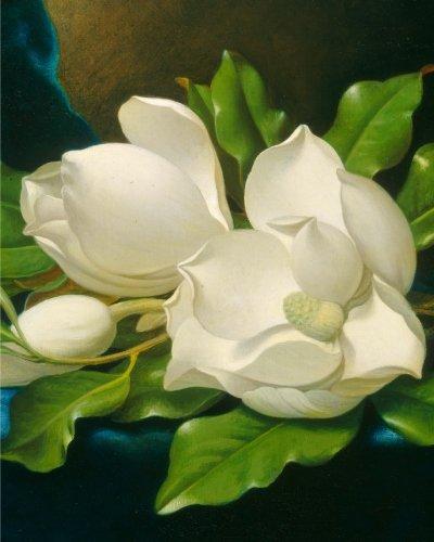 9781522731108: Giant Magnolias on a Blue Velvet Cloth: Notebook (8