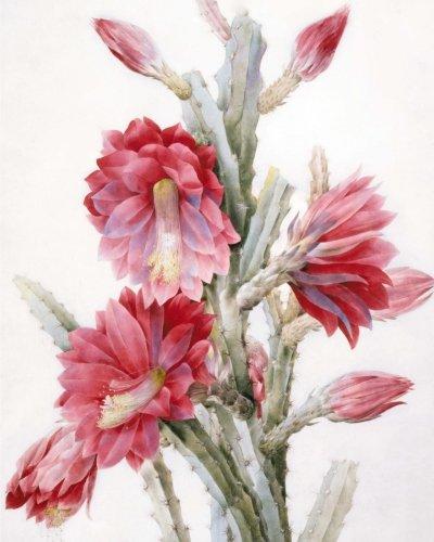 9781522732938: A Flowering Cactus: Notebook (8