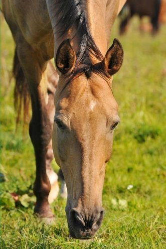 9781523481736: Akhal-Teke Horse Grazing Journal: 150 page lined notebook/diary