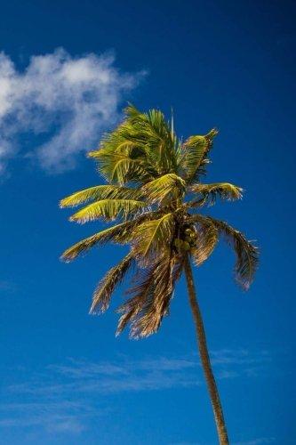 Palm Tree Journal: I'm Really a Journal
