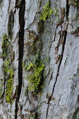 Tree Bark Nature Journal: I'm Really a Journal