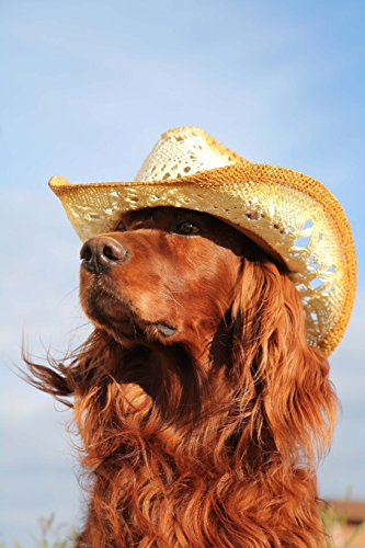 9781530096435: The Irish Setter in a Hat Dog Journal: 150 page lined notebook/diary