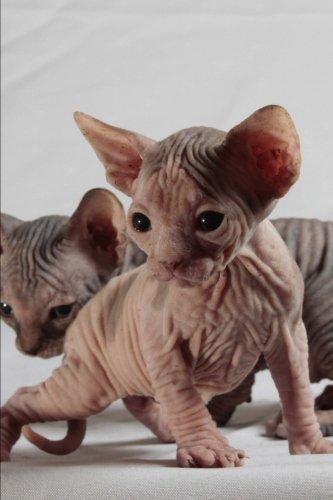 9781530252558: Sphinx Cat Journal