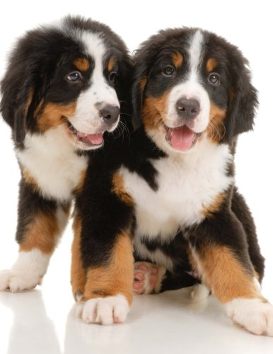 9781530562794: Bernese Mountain Dog Puppies, Jumbo Oversized: Blank Lined Journal for Your Thoughts, Ideas, and Inspiration