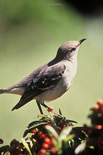 Mississippi State Bird - Northern Mockingbird Journal: Image, Cool