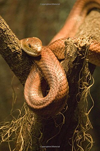 9781534819122: Red Rat Snake (Elaphe Guttata) Journal: 150 page lined notebook/diary