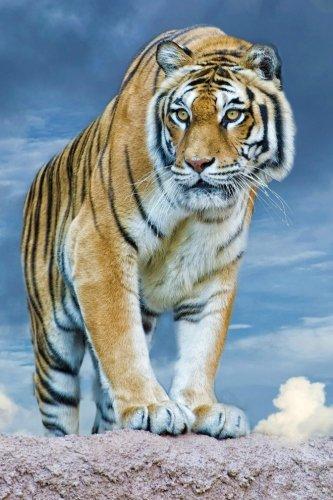 9781535272322: Great Cats 1: NDAS 365 Blank Journal, Trade Paperback 6