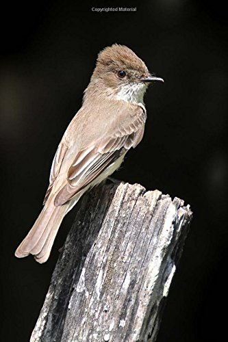 9781535316927: Brown Eastern Phoebe Bird on Old Fence Post Journal: 150 page lined notebook/diary
