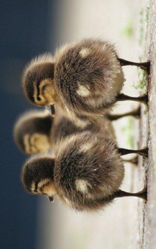 9781535445399: Duck Butts Journal: 120 Page, 5x8, Lined Journal Duckling Notebook Cute Journal