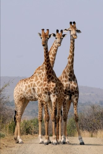9781537191553: Three Giraffes hanging out on the Savannah Animal Journal: 150 Page Lined Notebook/Diary