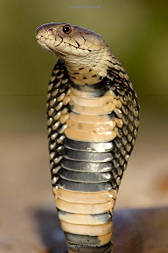 9781537267609: Mozambique Spitting Cobra Snake Journal: 150 page lined notebook/diary