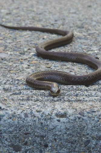 9781537425092: Common Garter Snake Journal: 150 page lined notebook/diary