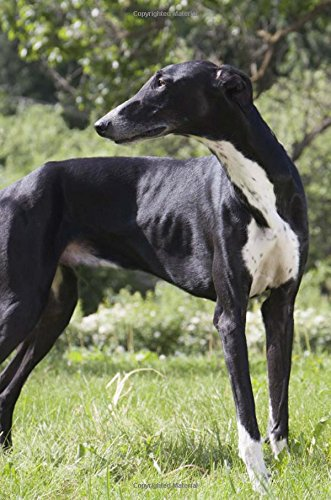 """Greyhound: Artified Pets Journal/Notebook/Diary, 6"""" by 9"""" and 160 Pages (Artified Pets/Dog)..."""