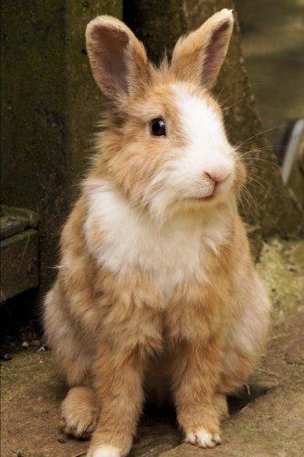 Mini Rex Rabbit (Oryctolagus Cuniculus) Journal: 150: Creations, Cs