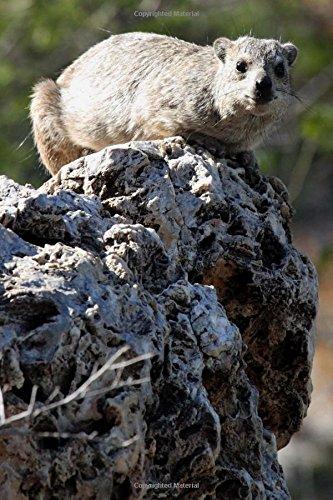 Rock Hyrax Procavia Capensis Serengeti National Park: Creations, Cs