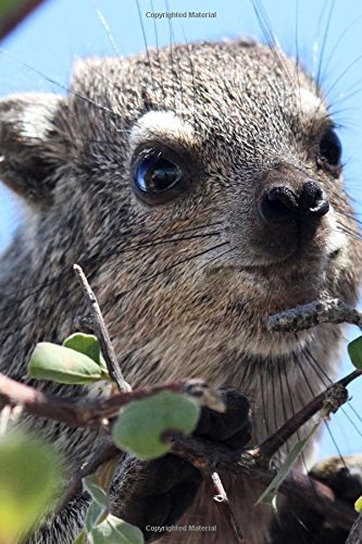 Hyrax in a Tree in Namibia Africa: Creations, Cs