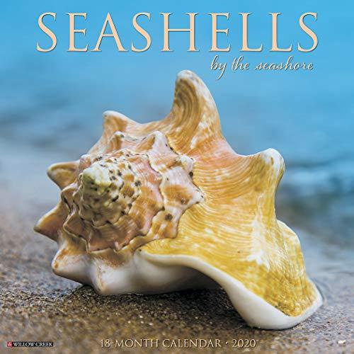 9781549207778: Sea Shells 2020 Calendar