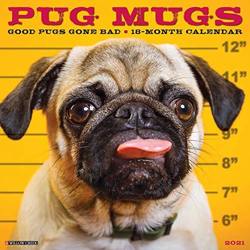 9781549213038: Pug Mugs 2021 Wall Calendar
