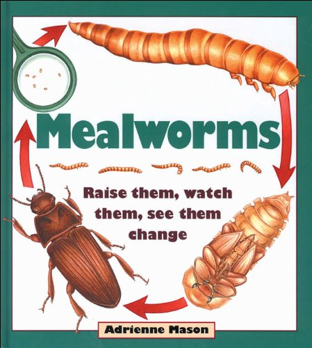Mealworms: Raise them, watch them, see them change: Mason, Adrienne