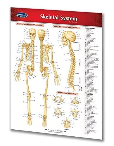 9781550801583: Skeletal System (Life Sciences)