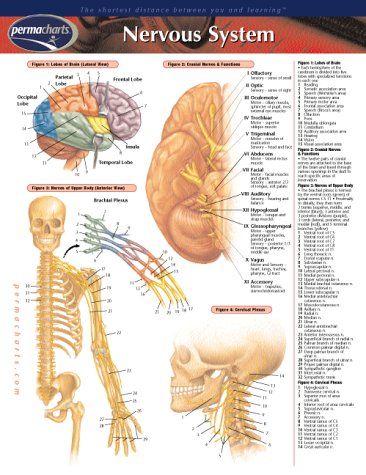 Nervous System (Life Sciences)