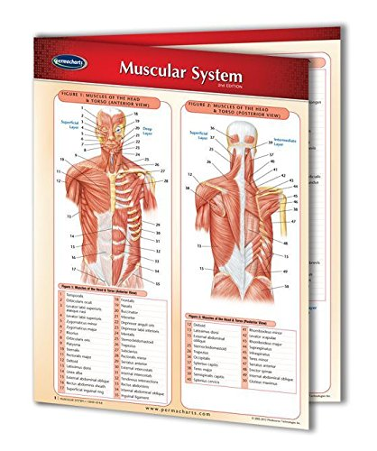 9781550802306: Muscular System (Life Sciences)