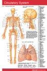 Circulatory System: n/a