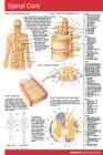 9781550804171: Spinal Cord- Pocket Card