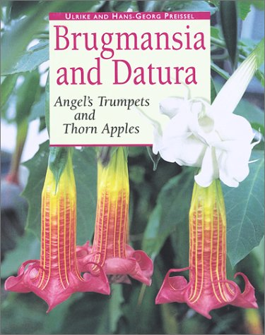 9781552095584: Brugmansia and Datura: Angel's Trumpets and Thorn Apples