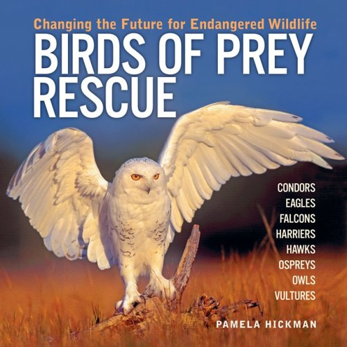 9781554071449: Birds of Prey Rescue: Changing the Future for Endangered Wildlife (Firefly Animal Rescue)
