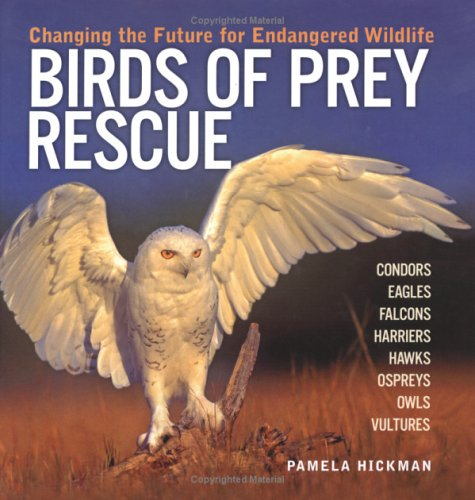 9781554071456: Birds of Prey Rescue: Changing the Future for Endangered Wildlife (Firefly Animal Rescue)