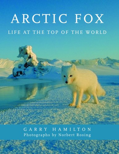 9781554073412: Arctic Fox: Life at the Top of the World