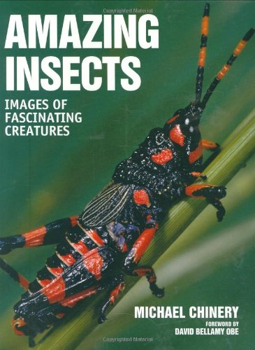 9781554073528: Amazing Insects: Images of Fascinating Creatures