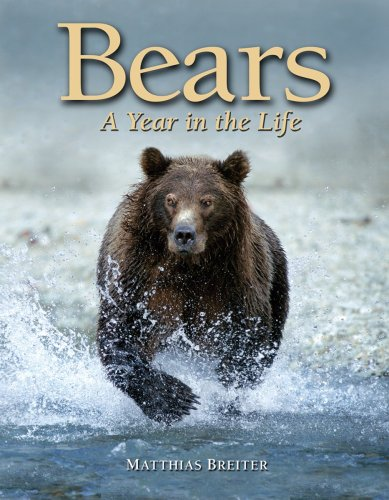 9781554074617: Bears: A Year in the Life