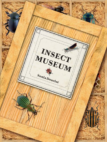 9781554074839: Insect Museum