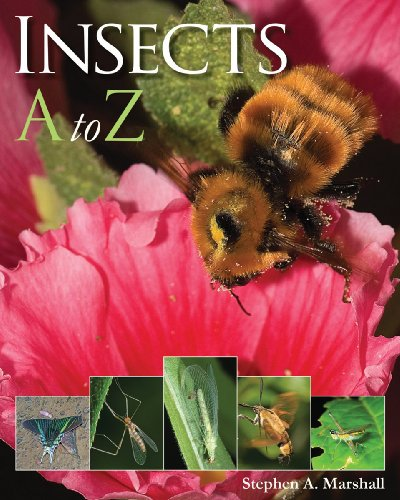 9781554075034: Insects A to Z (A to Z (Firefly Books))